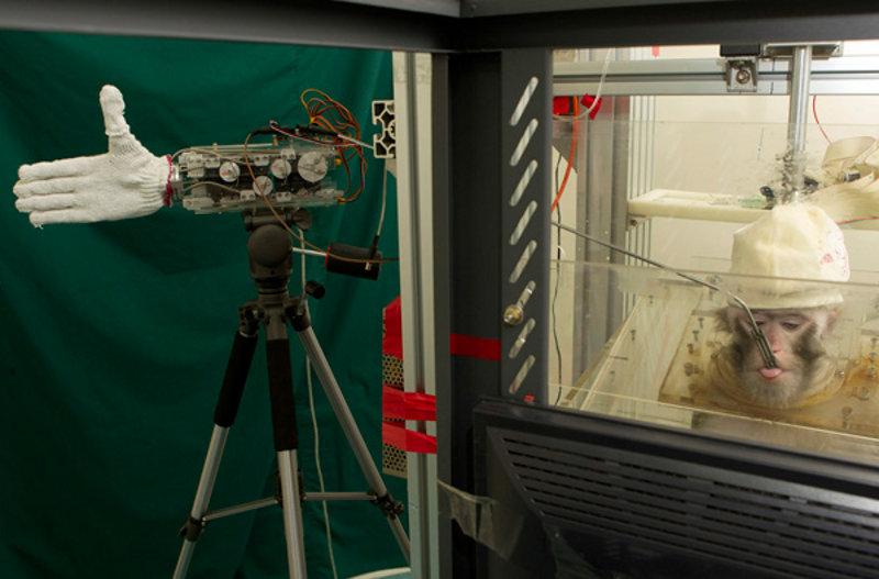 Unos macacos consiguen controlar un brazo robótico con su cerebro