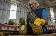 En víspera Día Nacional del Exportador: Danilo Medina destaca que, por primera vez, sector superó barrera de los 10 mil millones de dólares