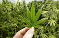 Canadá está listo para la legalización de la marihuana el próximo 17 de octubre, afirmó hoy el ministro de Seguridad Fronteriza, Bill Blair, quien añadió que las fuerzas de orden han estado preparándose durante los pasados 12 meses.