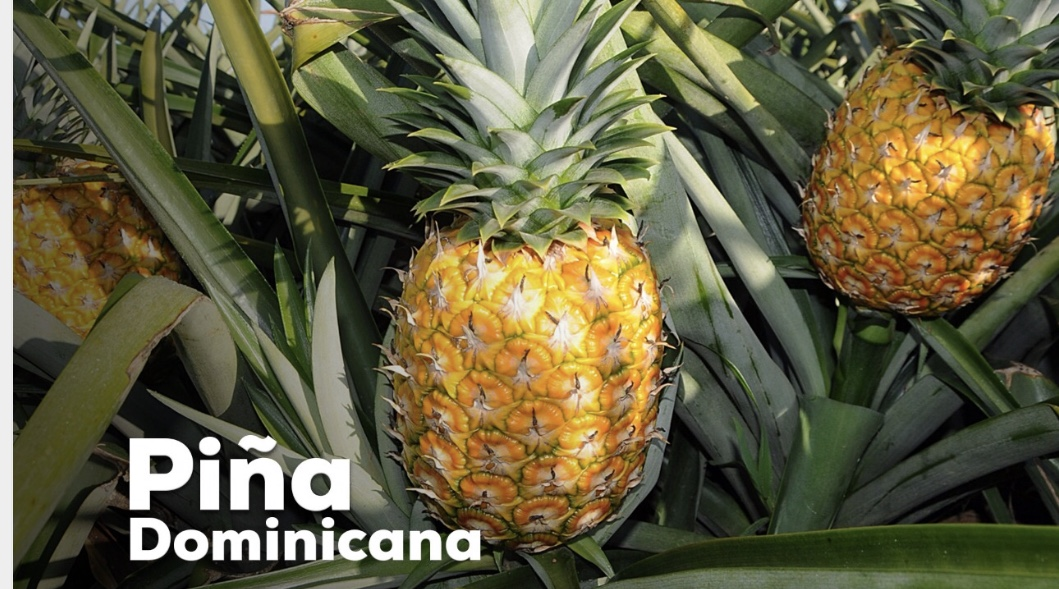 VIDEO: Piña Dominicana