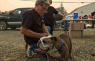 El conmovedor adiós entre familias y sus mascotas tras incendio en California