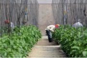 Presidente FIDA expresa admiración por reducción pobreza y políticas agropecuarias aplicadas por Danilo Medina a través de Visitas Sorpresa