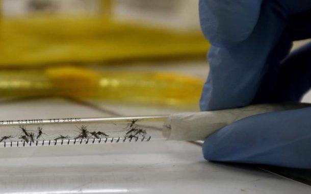 Se eleva a 17 el número de muertos por dengue en República Dominicana