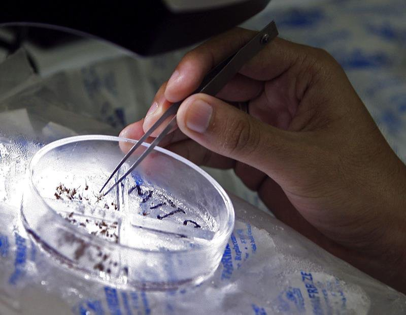 Detectan en Madrid el primer caso de transmisión sexual deldengueen Europa